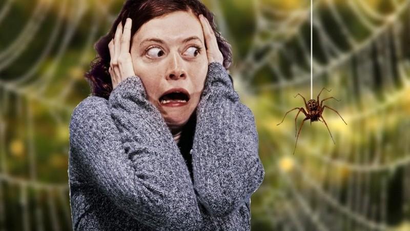 Как называется фобия пауков